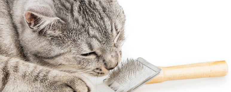 groom your cat