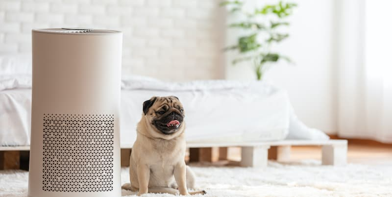 air purifier and dog
