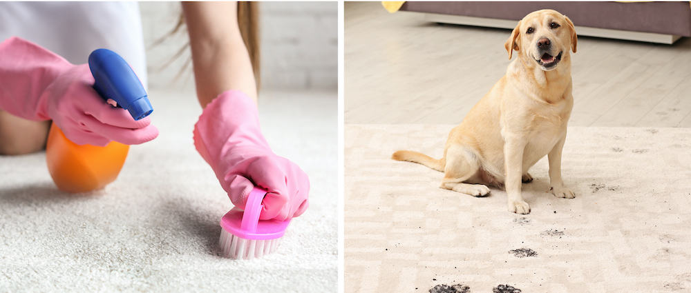 pet cleaning challenges