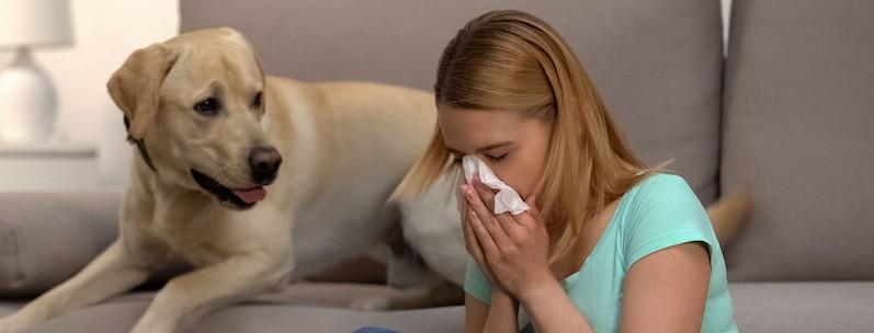 pet dander allergy symptoms
