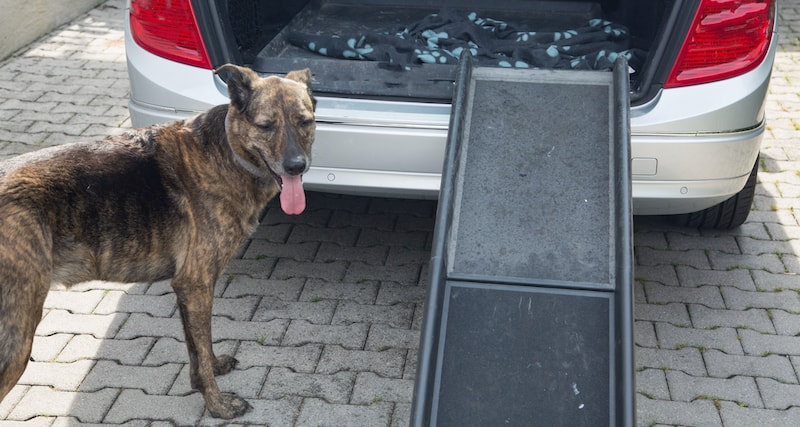 best ramp for dogs to get into car